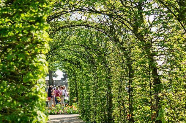 キューケンホフ花壇に咲くチューリップの花壇