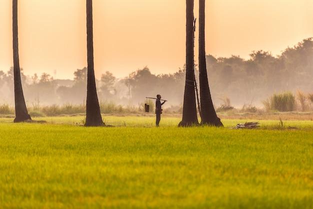 Люди с карьерой взбираются на пальмовый сахар, чтобы сохранить свежесть
