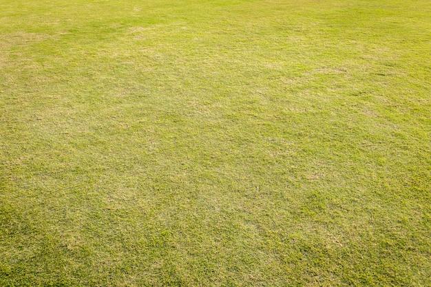 緑の芝生の芝生。背景の緑の草。