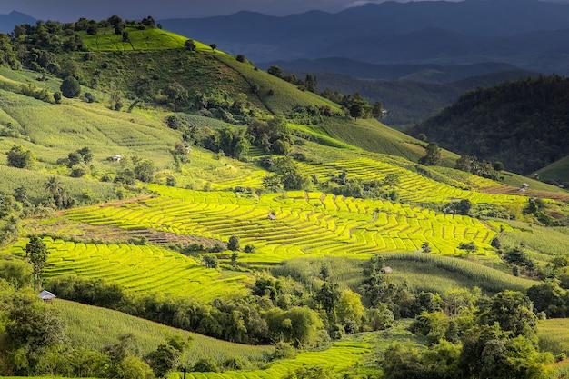 Зеленые террасы рисовых полей в па понг пиенг, мэй чаем, чианг май, таиланд