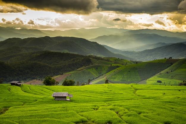 タイ、チェンマイ、メーチャエム、パポンピエンの緑の棚田