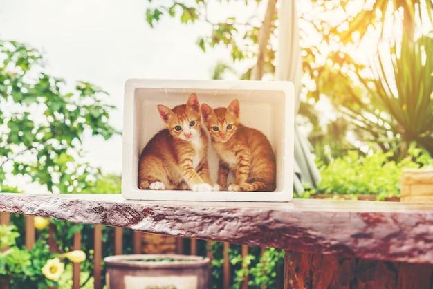 かわいいいたずらな黄色国内の子猫