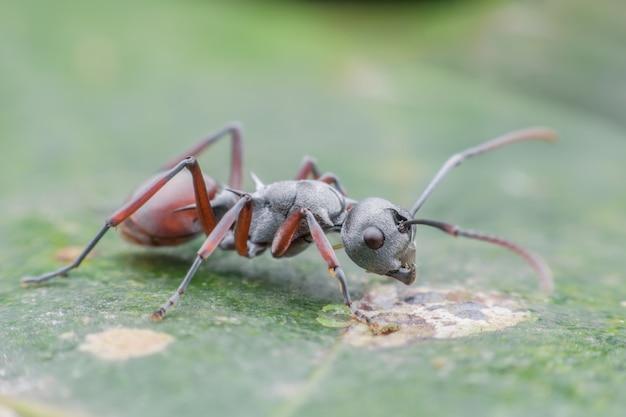 緑の葉の上のアリを閉じる