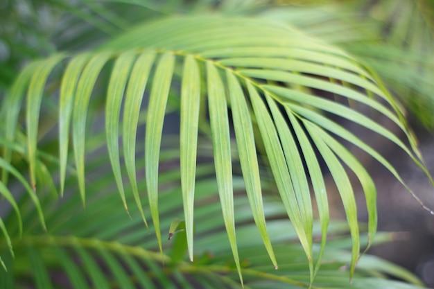 白い壁に影を持つ緑の熱帯ヤシの葉