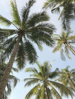 熱帯のヤシの木の庭