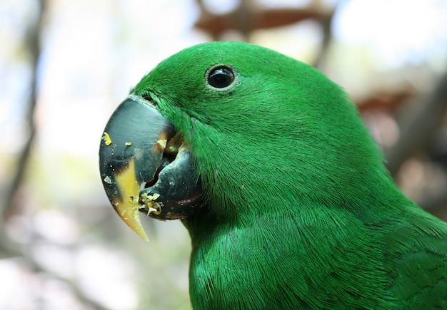 Зелёная птица-попугай