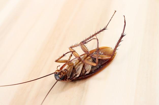 木製のテーブルの上の死んだゴキブリ