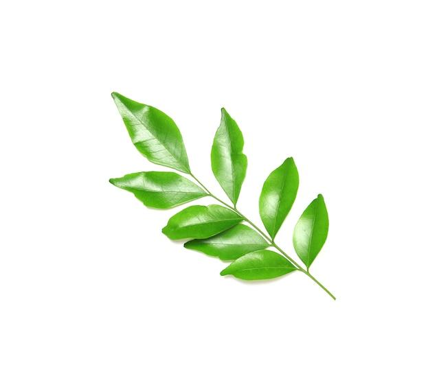 Коллекция тропических зеленых листьев