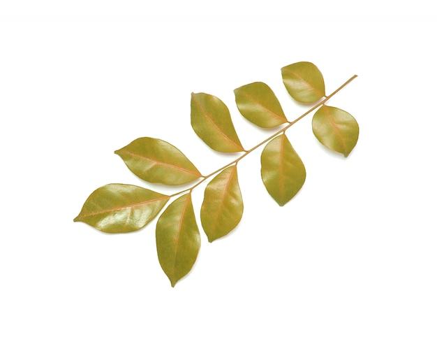 コレクション熱帯緑の葉