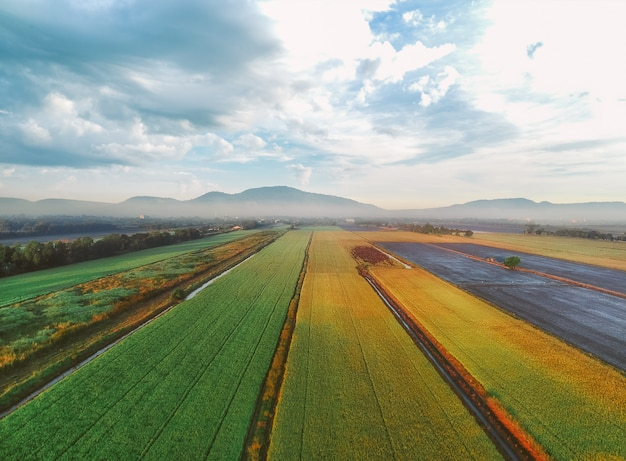 Вид с воздуха на зеленые рисовые поля