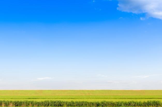 曇りの日の草原と空の眺め