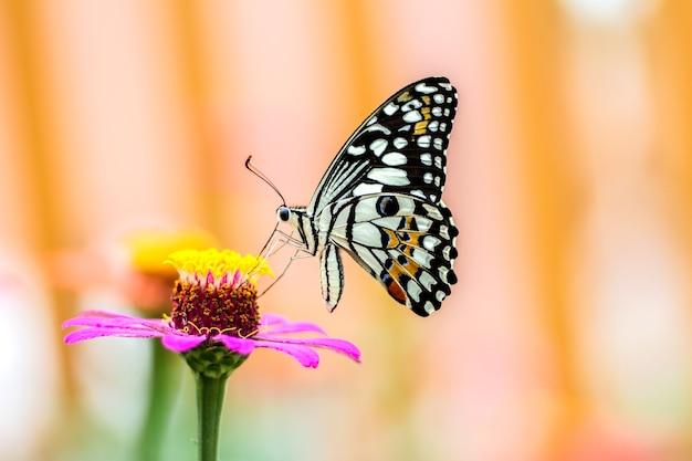花の蝶と背景のぼかし