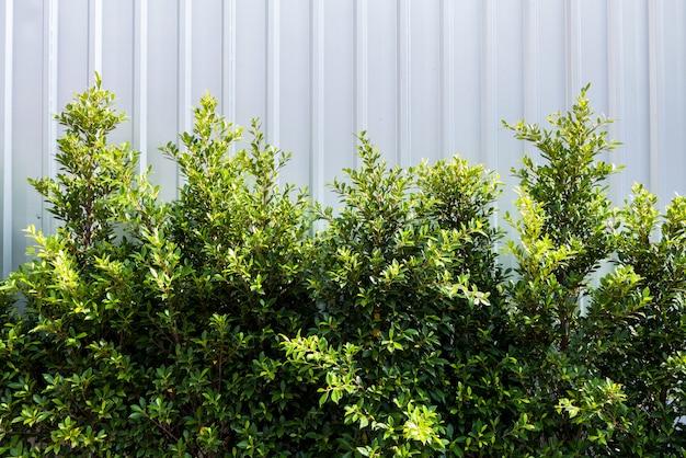 白い背景の上のツリー