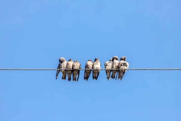 鳥、ロープの上に座って陽気にさえずる小鳥がたくさん