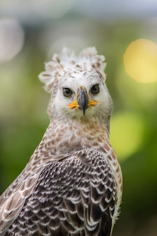 Портрет орла с символом охоты