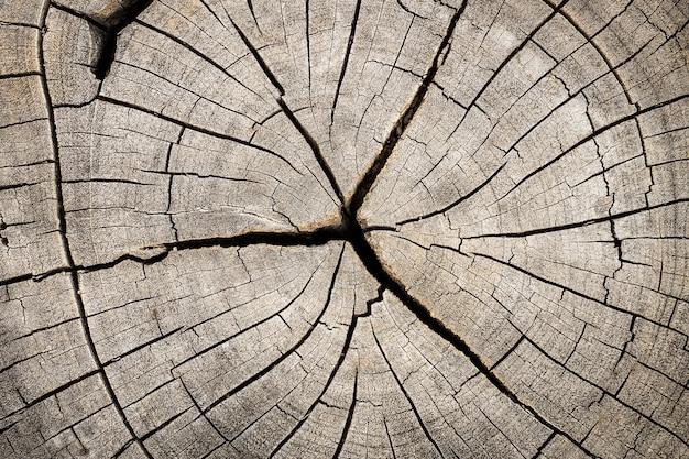 パターンとして亀裂と年輪とカット木の切り株のクローズアップ。
