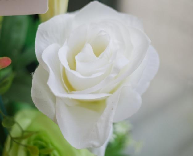 クローズアップ、マクロ白いバラの花