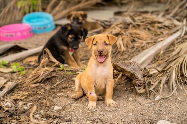 地面に座っている茶色と黒の野良犬