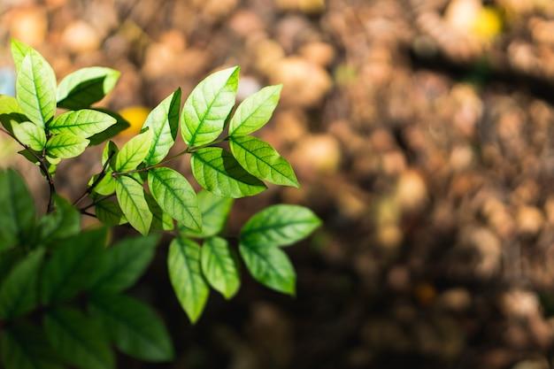 日光と濃い緑の葉の自然ビューをクローズアップ