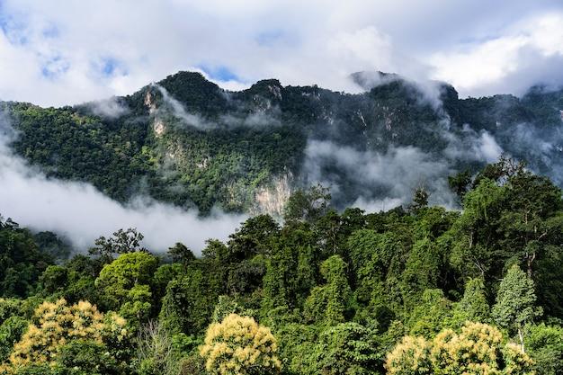 夏の山道風景地形緑の土地自然の風景