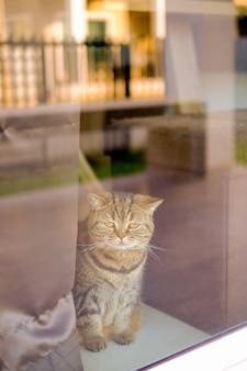 Животное красивая детская кошка комфорт домашнее животное отдых