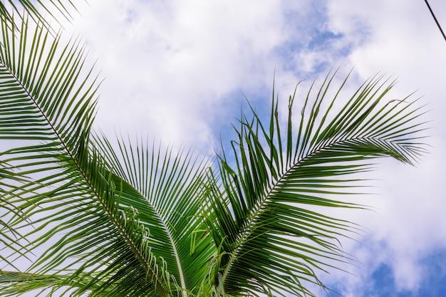 青い空に対するココナッツの木。熱帯海岸のヤシの木。