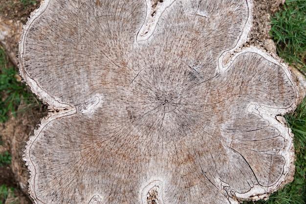 Деревянная предпосылка текстуры. поверхность древесины с цветом и картиной природы. вид поперечного сечения бревна обрезного дерева текстурированный.