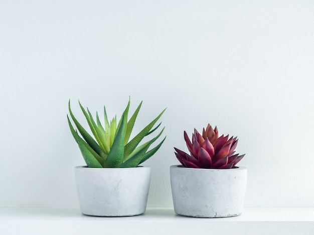 白の白い木の棚にモダンな幾何学的なセメントプランターで緑と赤の多肉植物