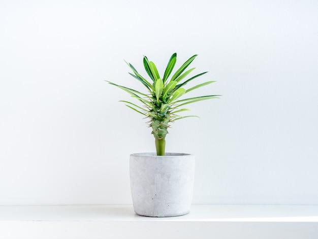 Зеленый кактус в бетонный горшок.