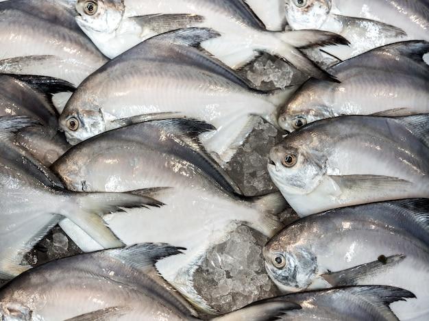 Фон свежей масляной рыбы