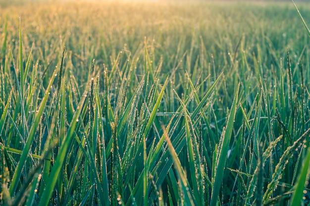 緑豊かな畑で朝の日差し。