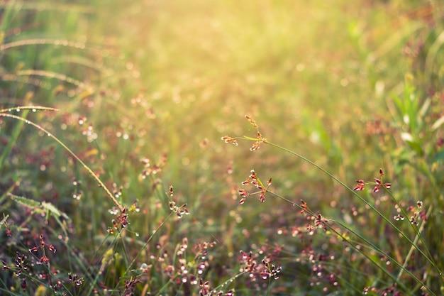 草の上に水をドロップをクローズアップ。