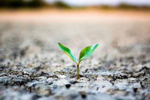 乾燥した地面の木。