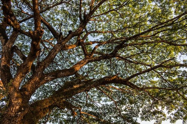 世界を救う植物の木、コンセプトグリーンの世界。