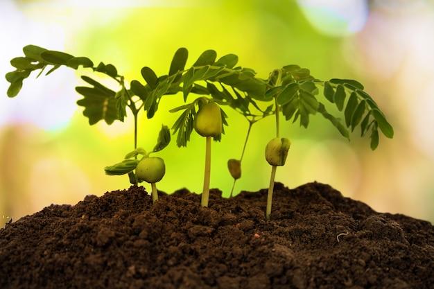 木の成長。