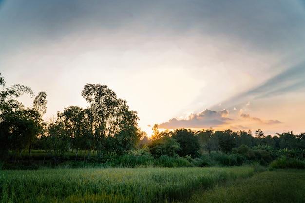 緑の田んぼと夕日