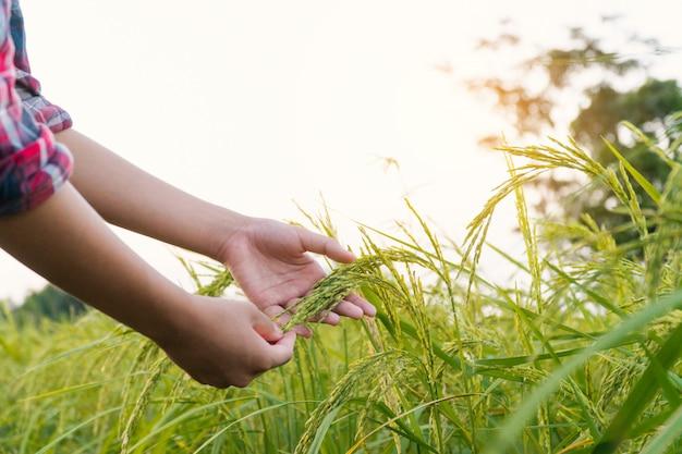 女性の手がフィールドで米をチェックします。