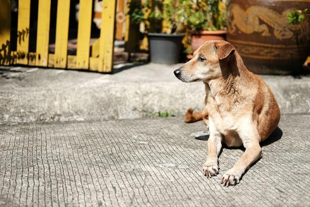 犬の茶色の自然の庭のコンクリートの床に座って