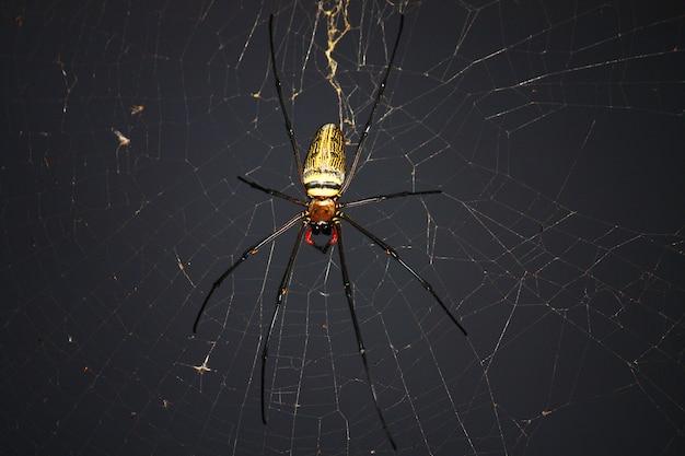 自然の緑の背景を持つクモの巣にクモ。