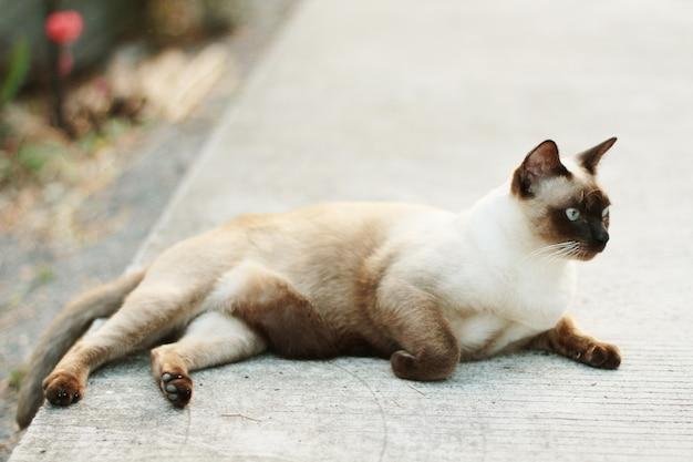 Сиамская кошка сидит на бетонном полу