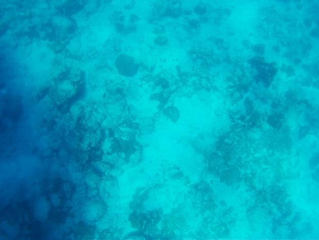 海の美しい水中世界