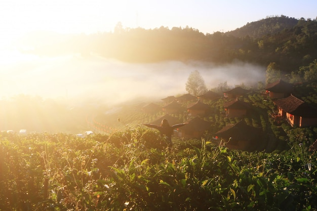 アジアの女性の立ちバックと腕は、美しい霧と山の日の出の自由の生活の楽園で空気を開きます