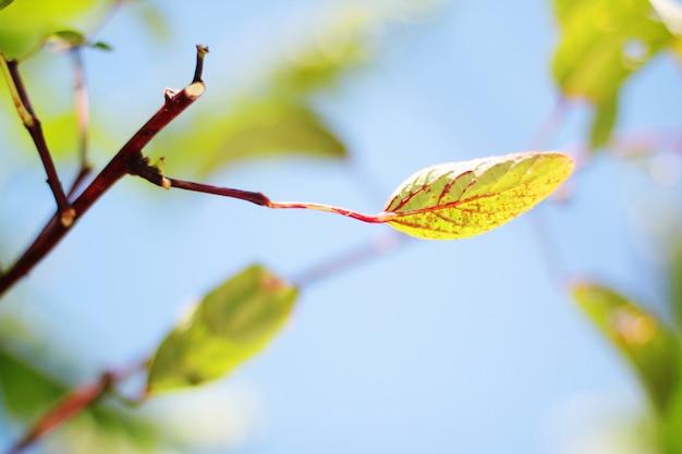 Зеленые листья ветви против голубого неба в естественном солнечном свете