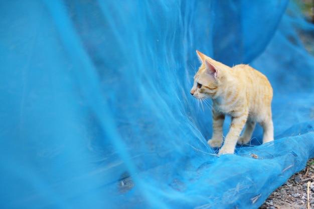 かわいいオレンジ色の子猫の縞模様の猫を楽しんで、自然の日光と庭の青いネットでリラックス