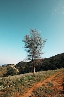 青い空とビンテージトーン色の谷山の丘の上に孤独な木