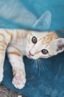 かわいいオレンジ色の子猫の縞模様の猫を楽しんで、庭の青いネットでリラックス
