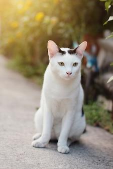 Белый кот наслаждается в саду