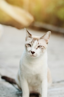 Серый полосатый кот наслаждайся красивыми цветами в саду