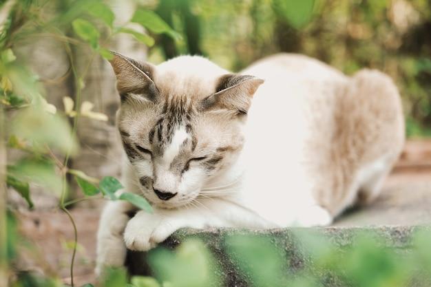 かわいい猫が庭の瓶に座って