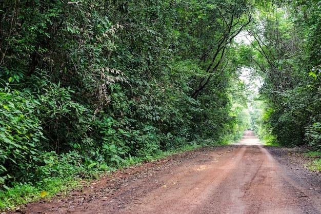 森林を通って伸びる砂利道。